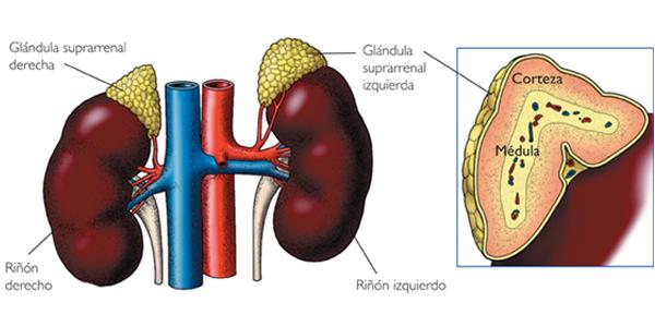 hiperplasia suprarrenal congénita síntomas no clásicos de diabetes